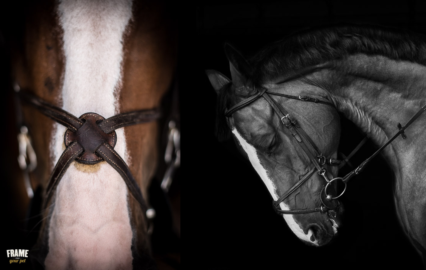 los angeles fine art equestrian photography