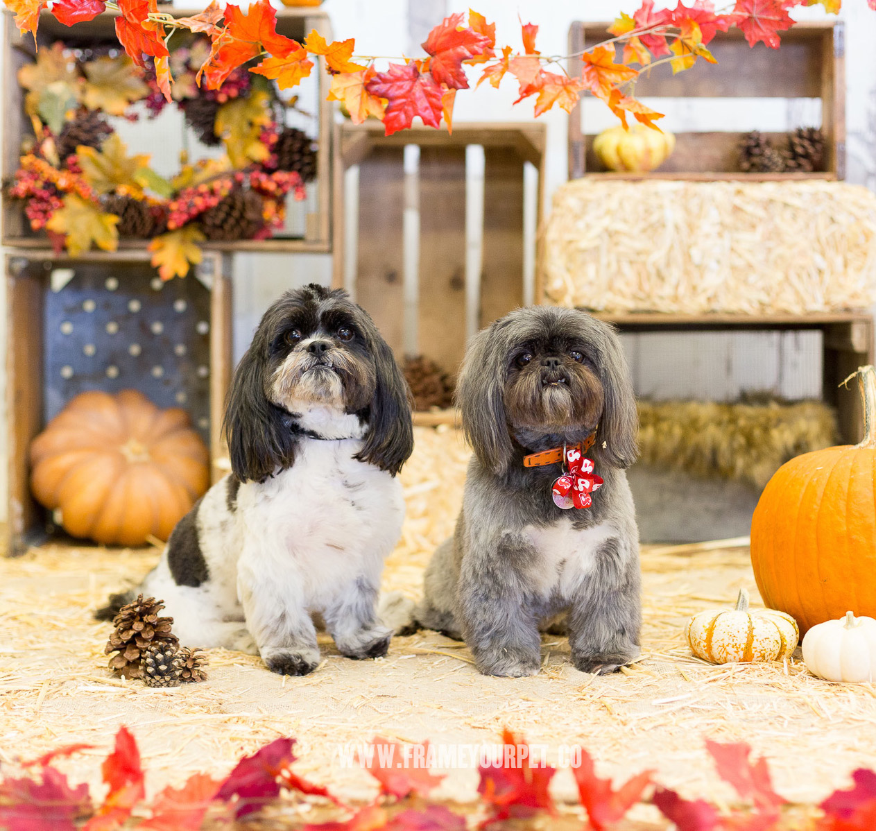 cute-photos-of-dogs-for-halloween