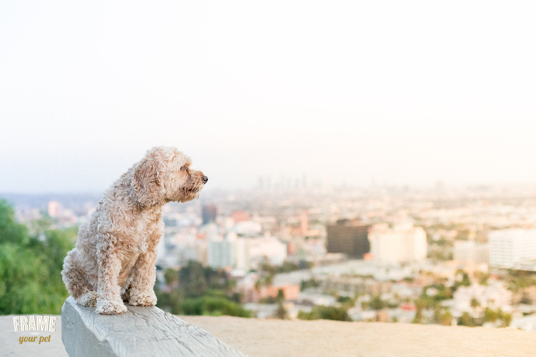 Porter enjoying the stunning views of Los Angeles city from the top.