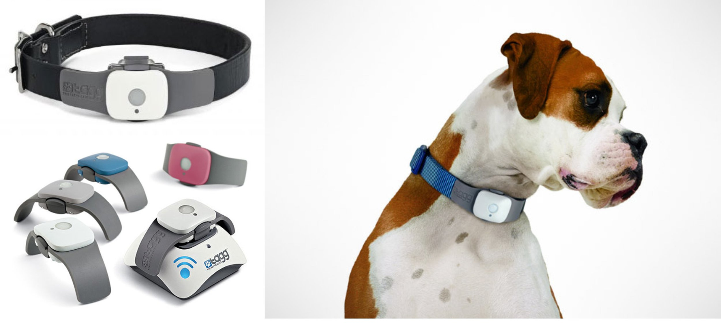 tagg-pet-tracker-gps-for-dogs-holiday-gift