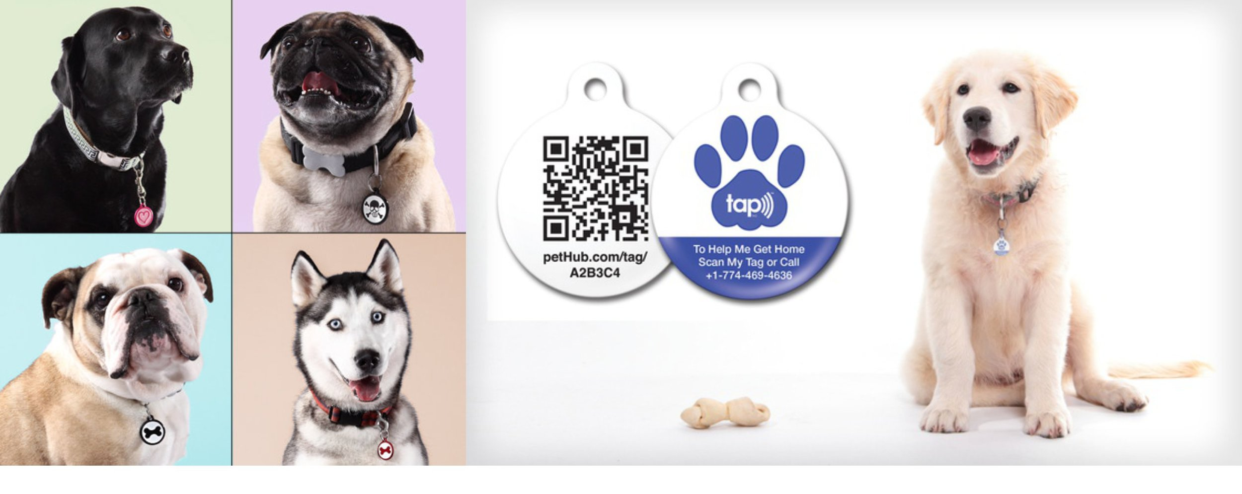 pethub-smart-pet-identifier-for-dogs
