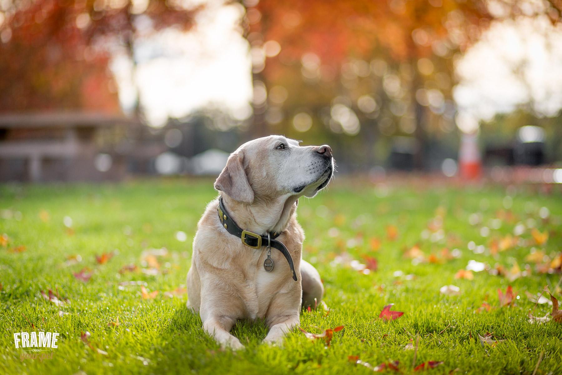 dog-photo-session-at-header-park