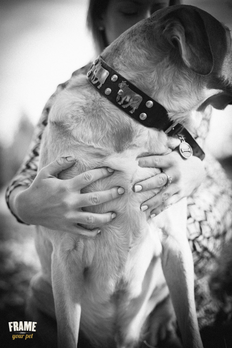 black and white dog photography bay area by frame your pet