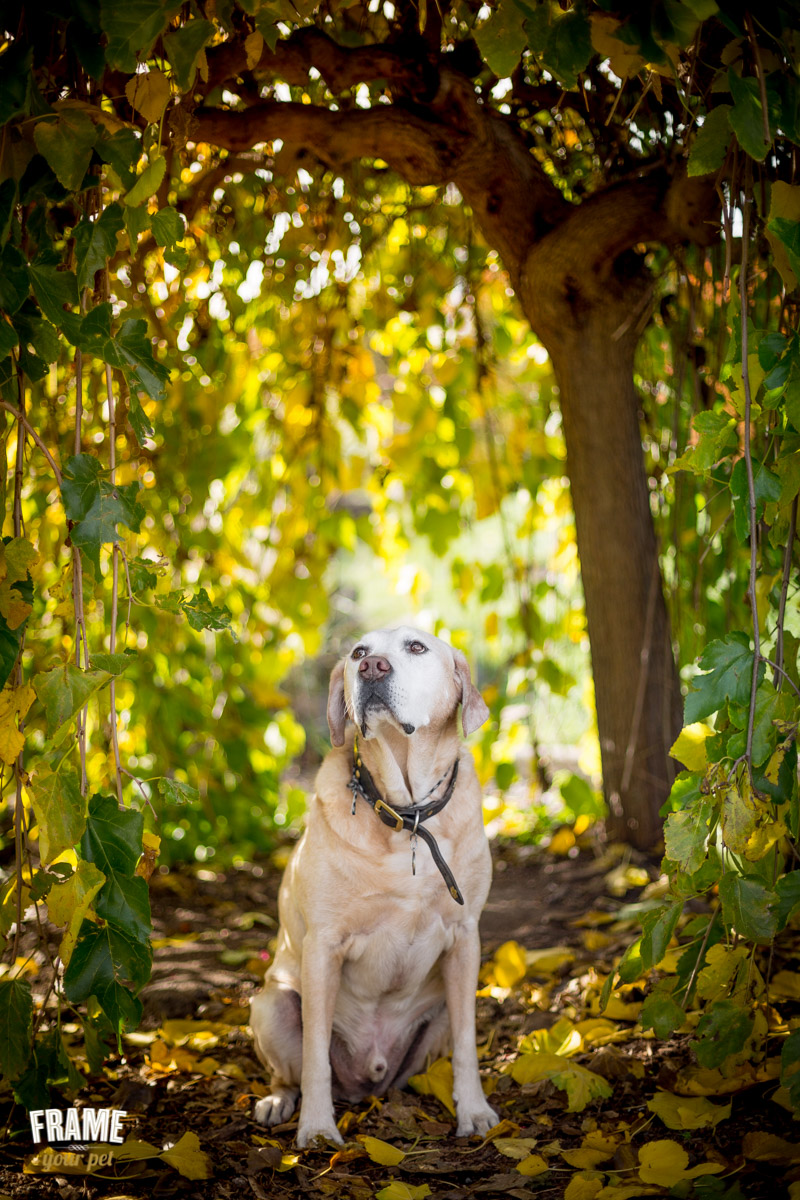 romantic dog photography outdoor session