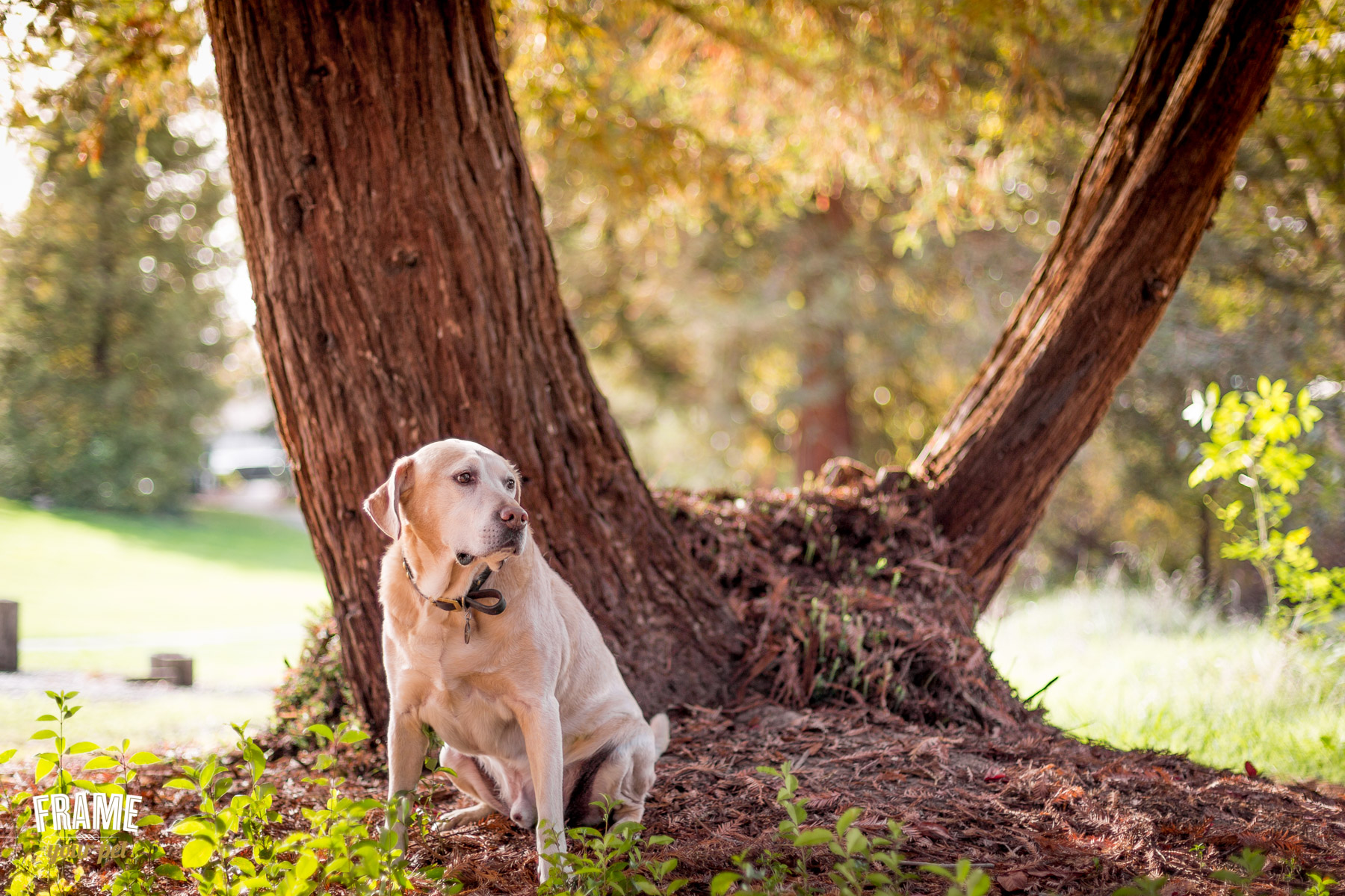 los-angeles-dog-photography-pet-photographer-52.jpg