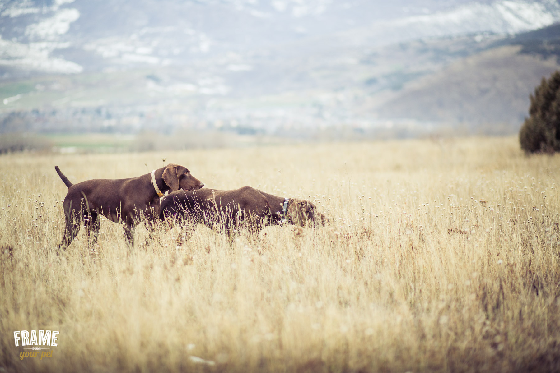 perros-de-caza-en-parada