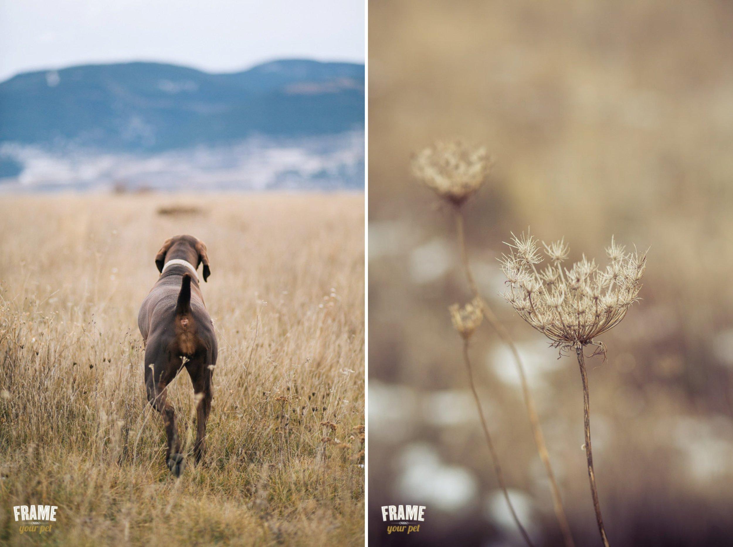 los-angeles-best-dog-photographer