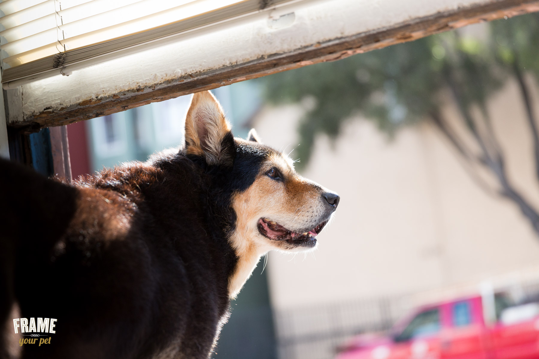 Every single day, Zoe spends most of her time patrolling the streets of San Francisco from her window.
