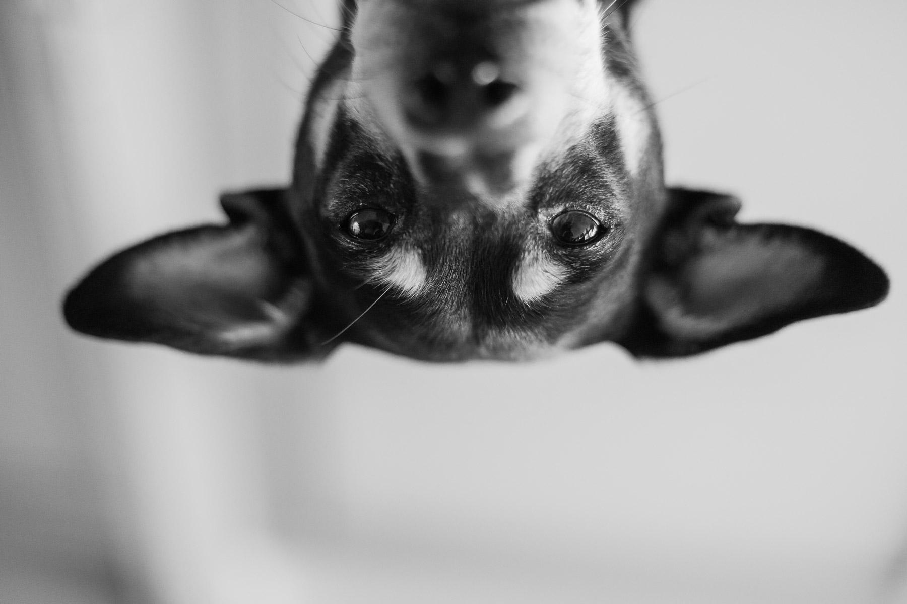 black-and-white-artistic-dog-photo