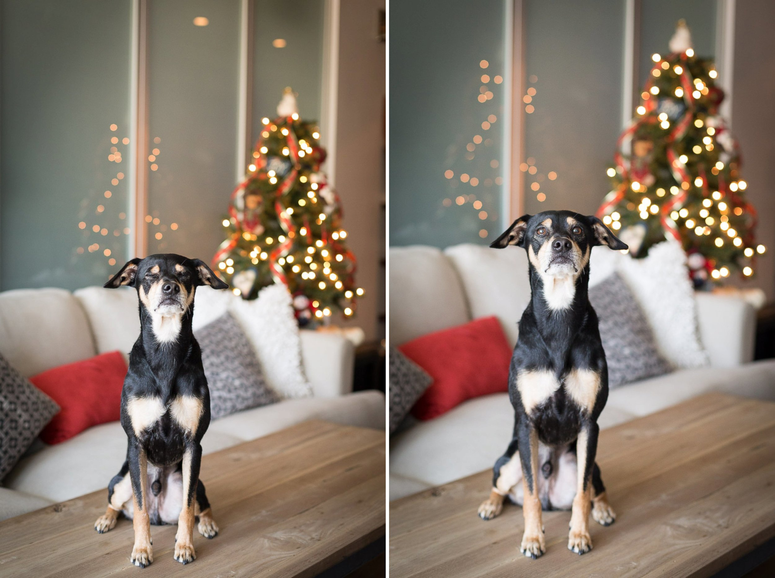 holiday-gift-certificate-for-dog-lovers
