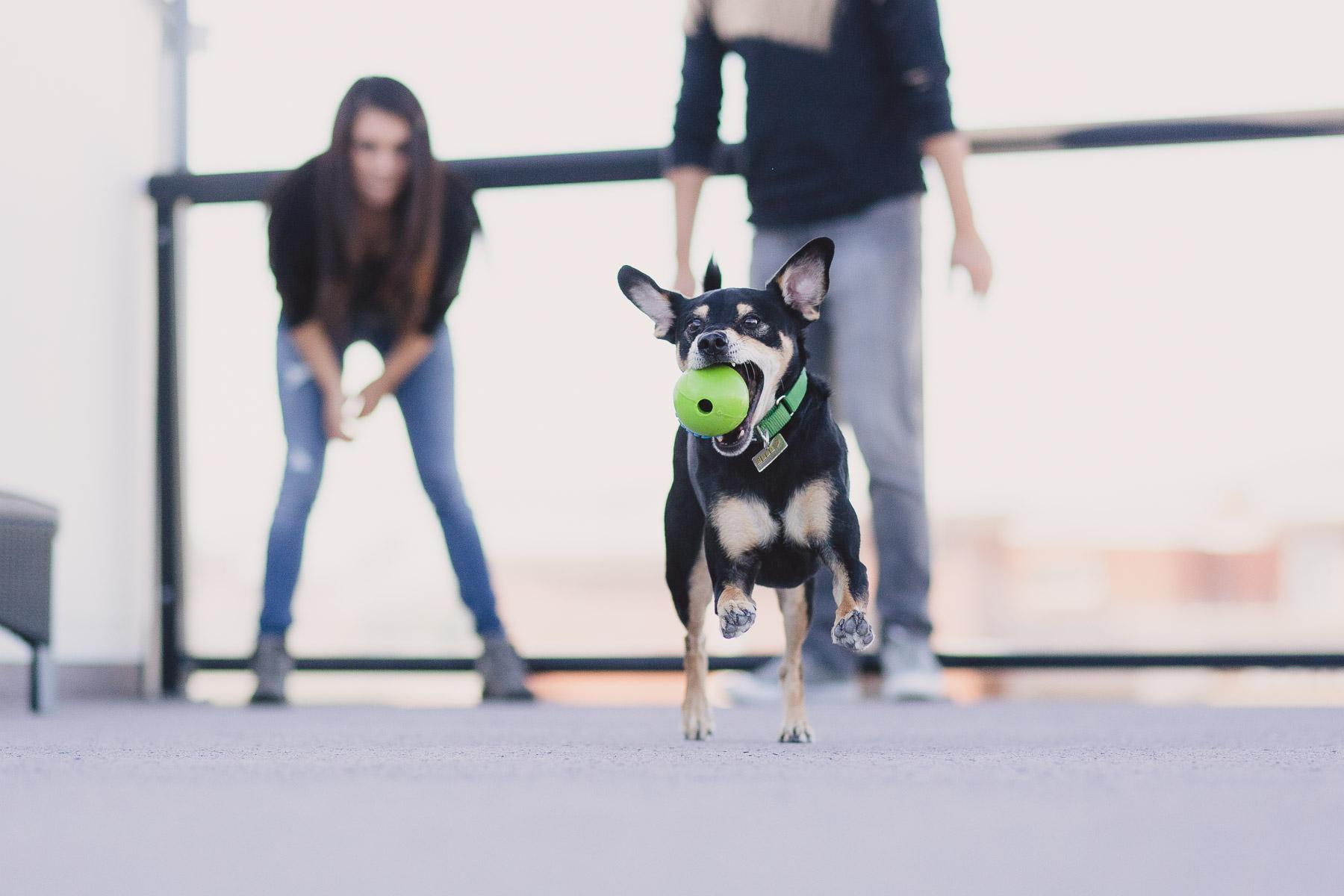 healthy-spot-dog-fetching-ball