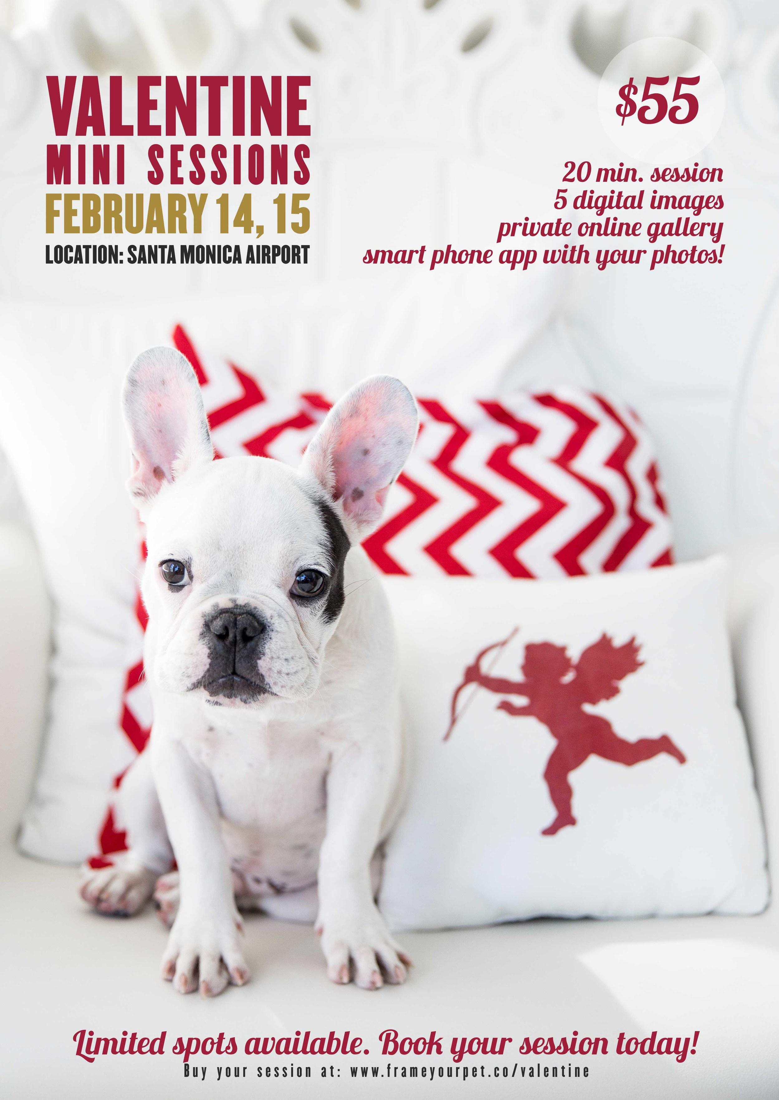 valentine-gift-dog-photographer-session-los-angeles