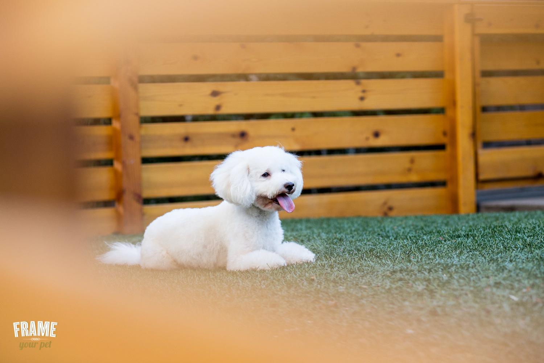 artistic-photos-of-dogs.jpg