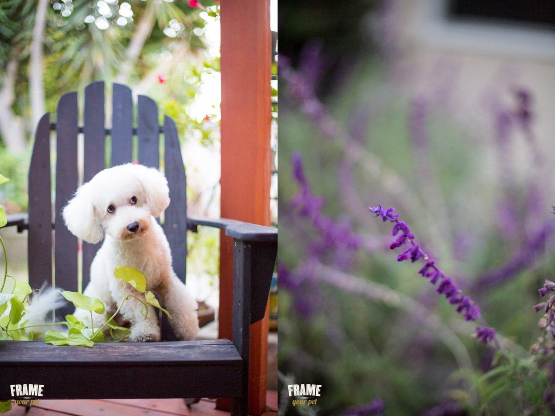 dog-photographer-california.jpg