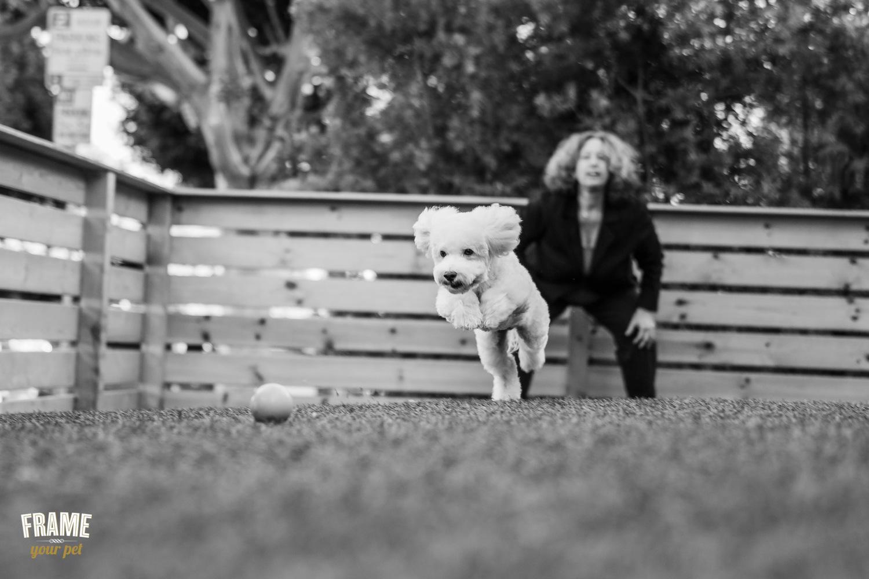 dog-photography-santa-monica.jpg