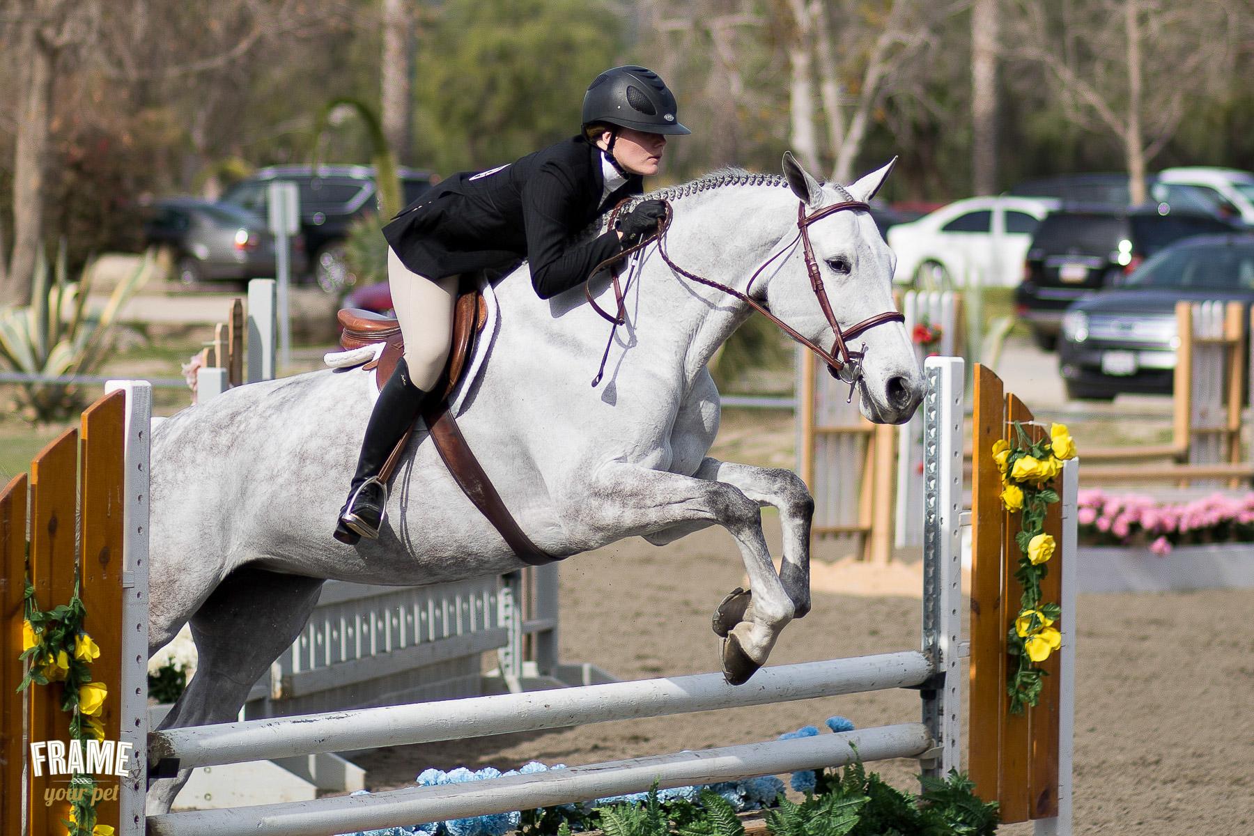 Equestrian Drassage Competition At Hansem Dam Frame Your Pet Los Angeles Pet Photographer