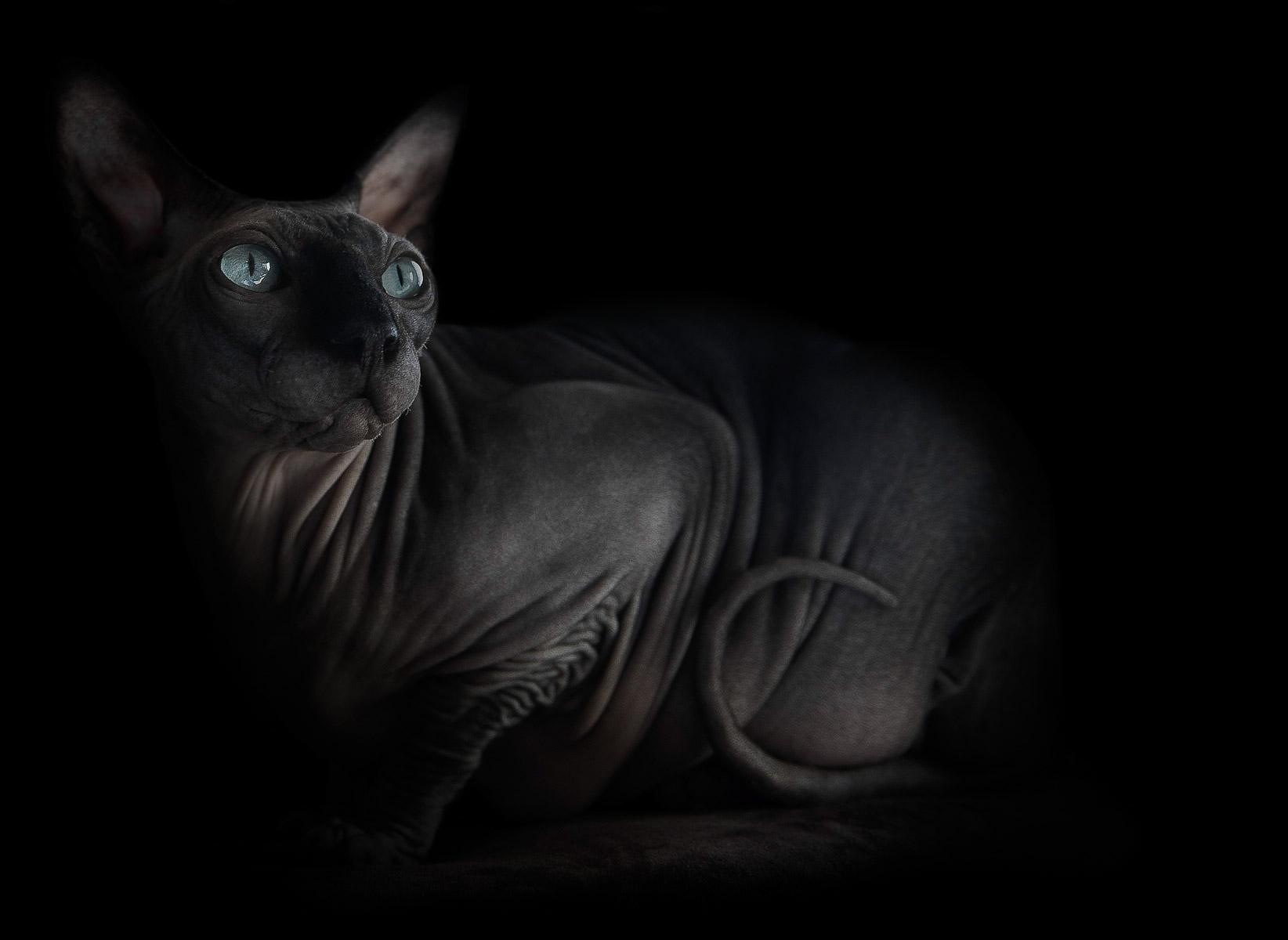 sphynx-cat-photos-by-alicia-rius-7.jpg