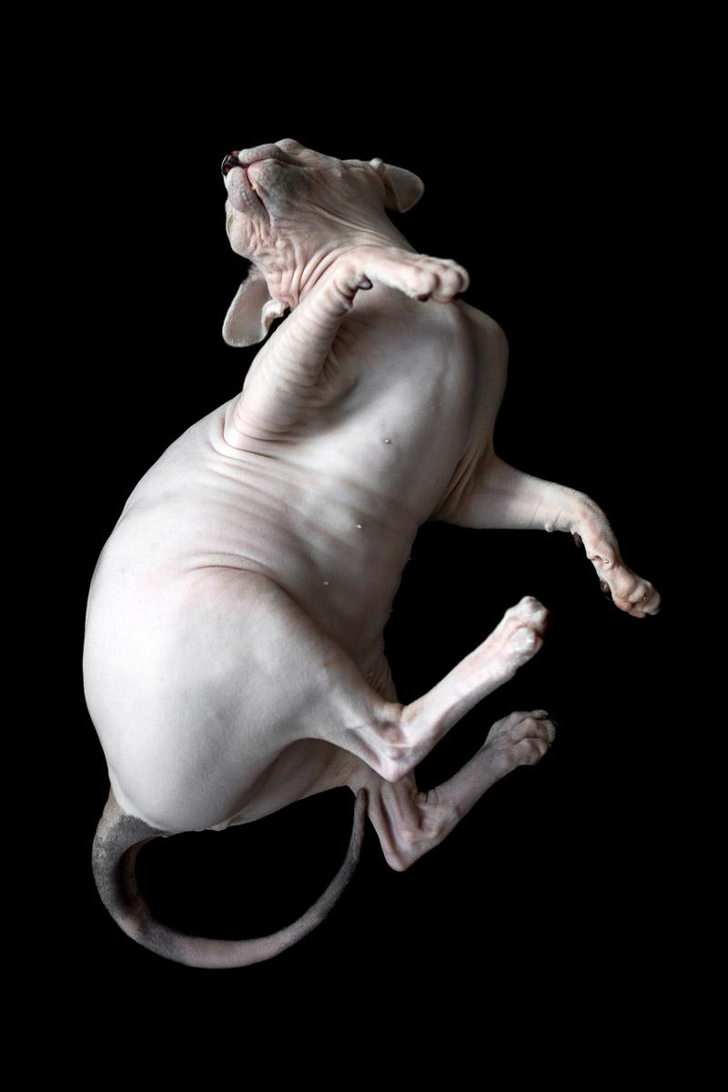 sphynx-cat-photos-by-alicia-rius.jpg