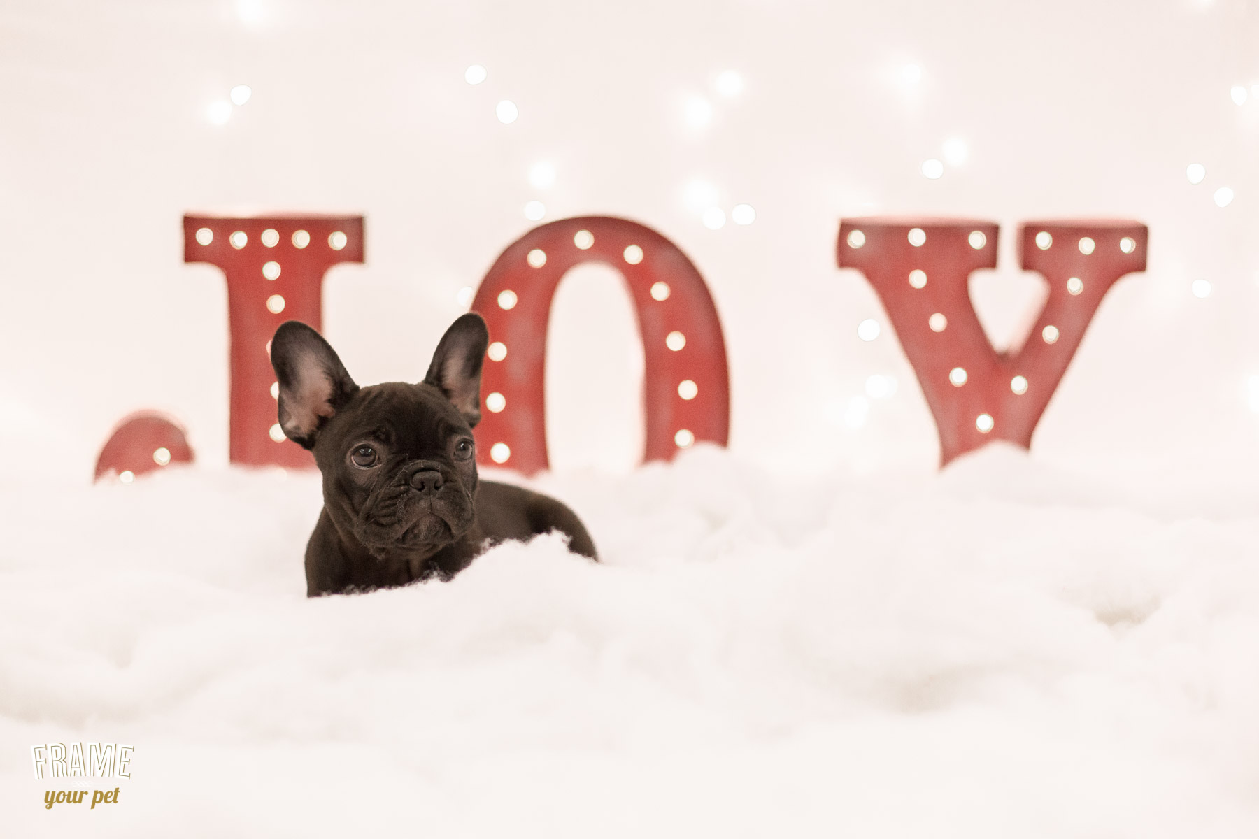 pet-photography-mini-sessions-healthy-spot-los-angeles-39