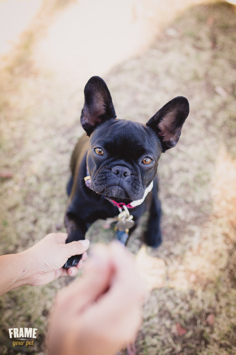 Dog treats are the best trick to get dog's attention!
