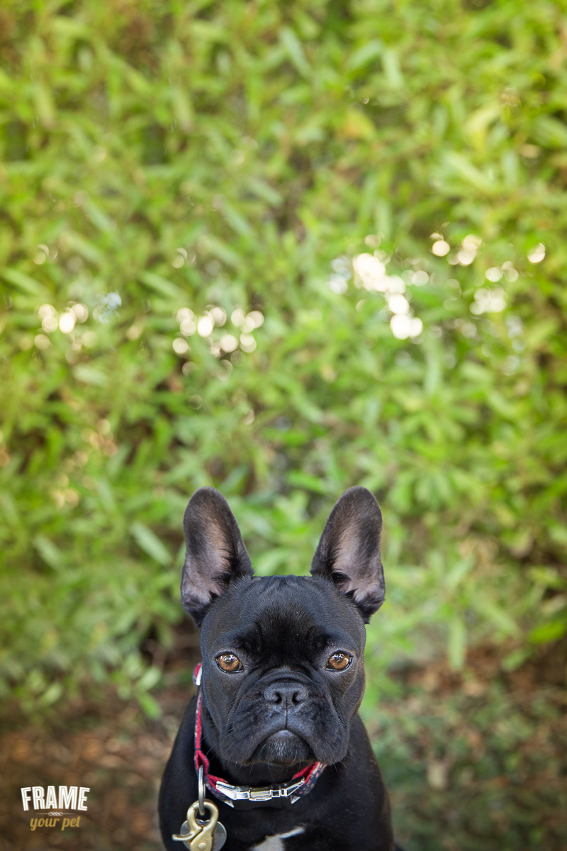 I love negative space in my dog portraits.