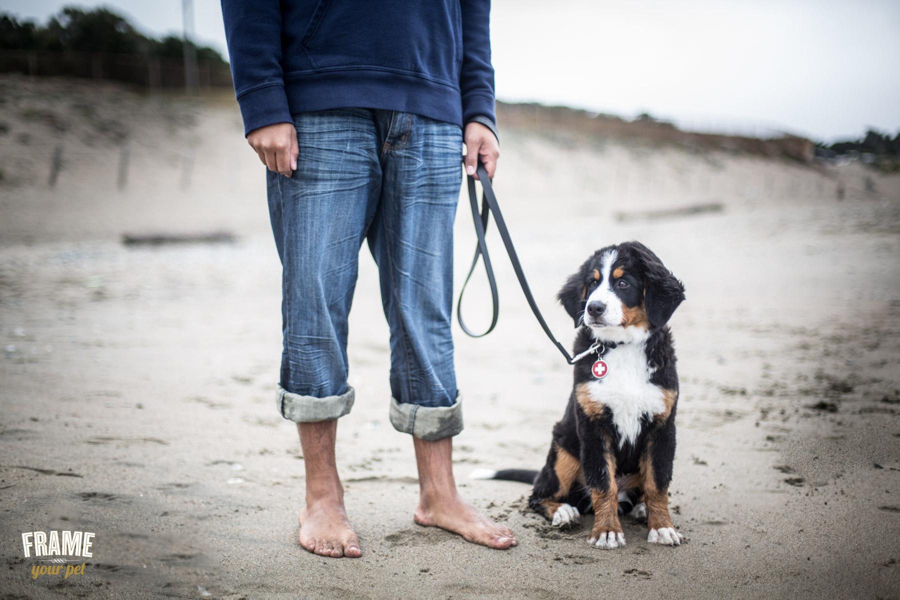 modern-dog-photographer-los-angeles.jpg
