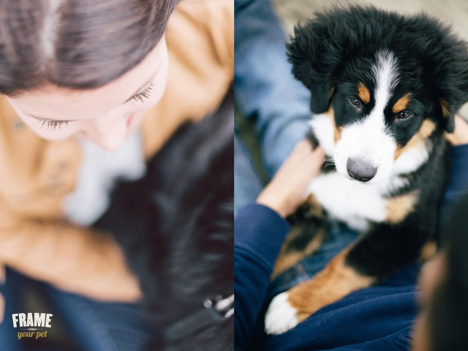 pet-photographer-1.jpg