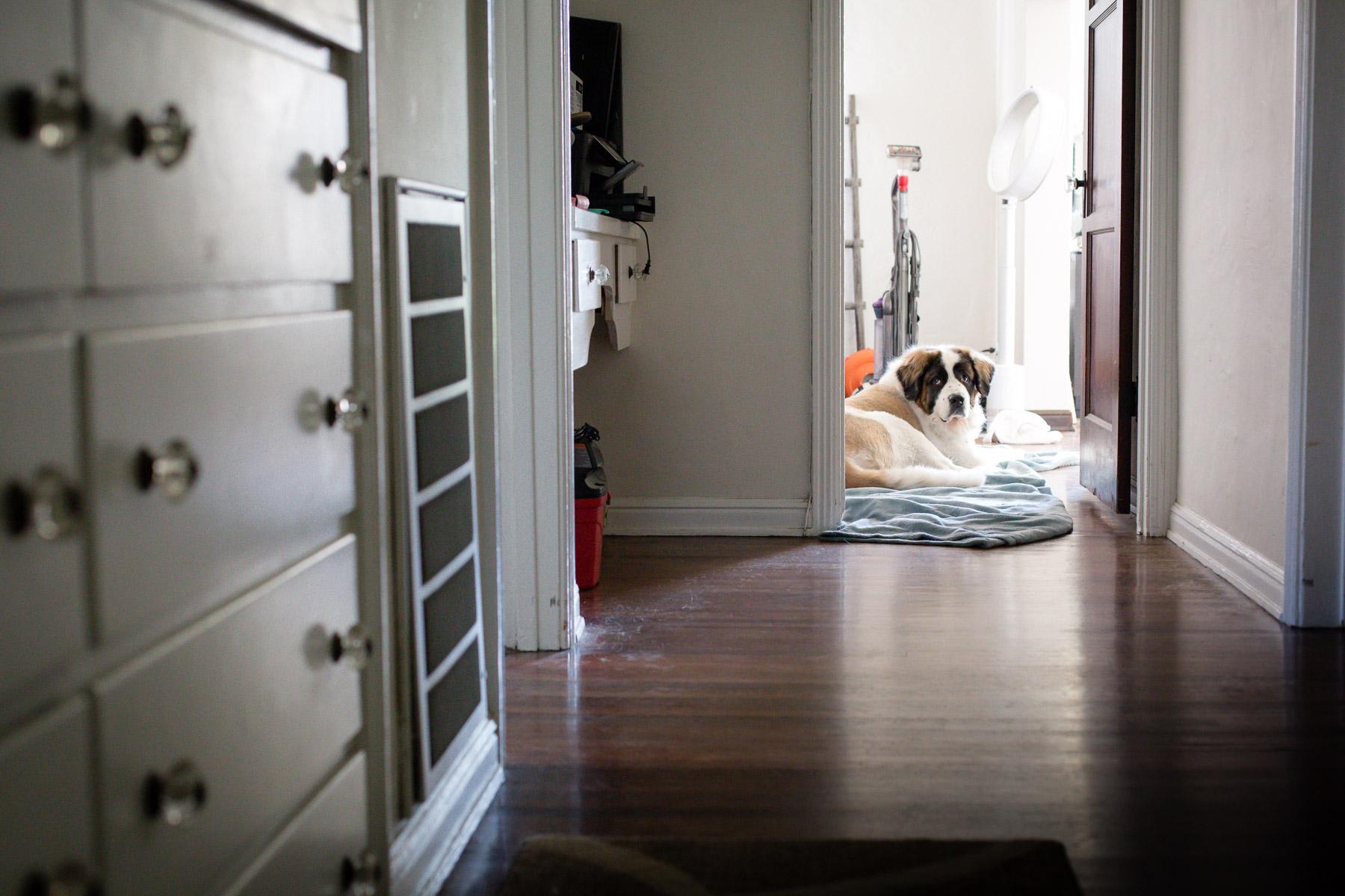 dog-photographer-3.jpg