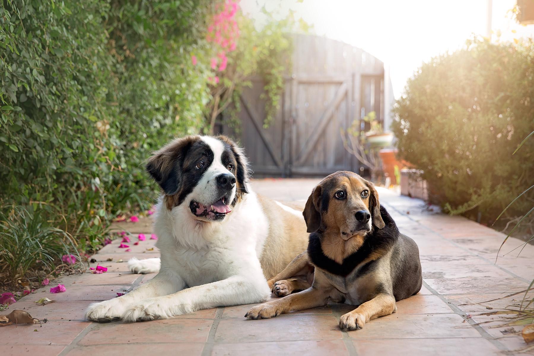 dog-photography-los-angeles3.jpg