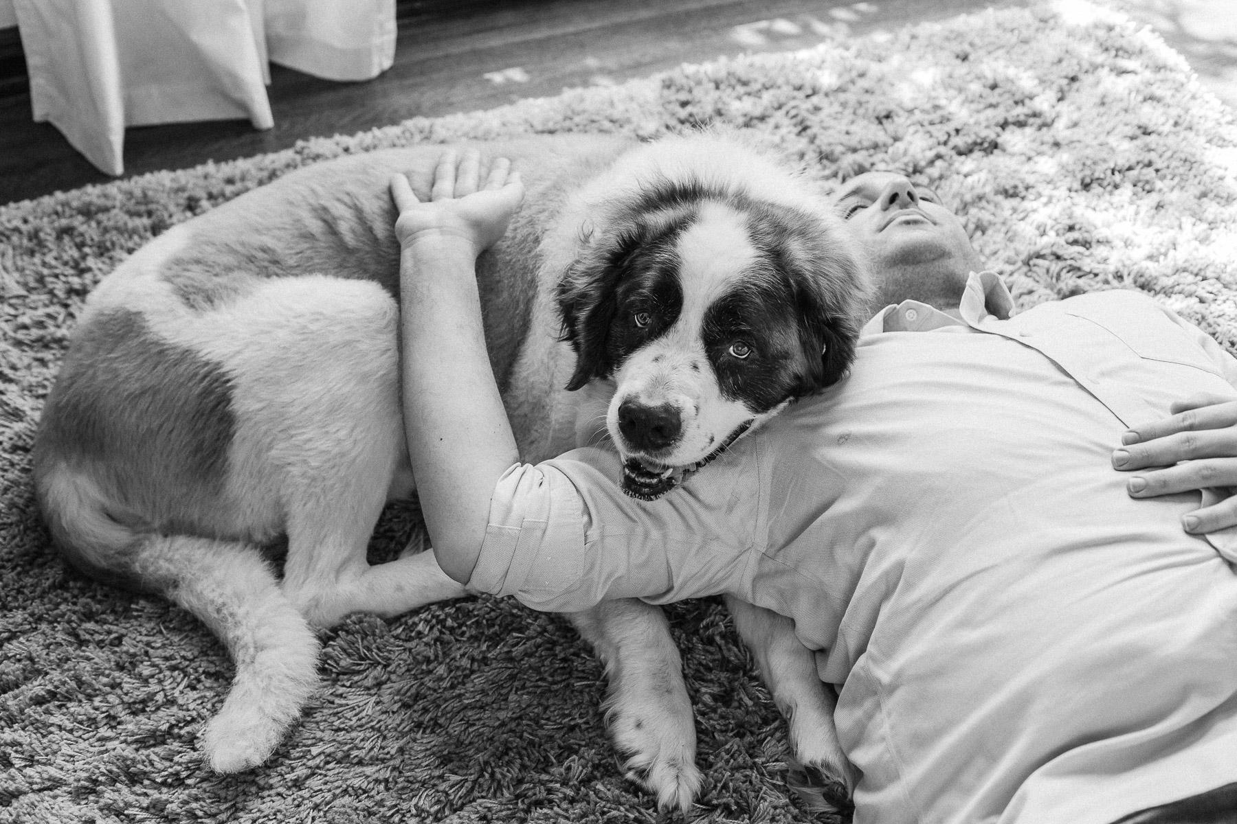 Los-angeles-dog-photographer-2.jpg