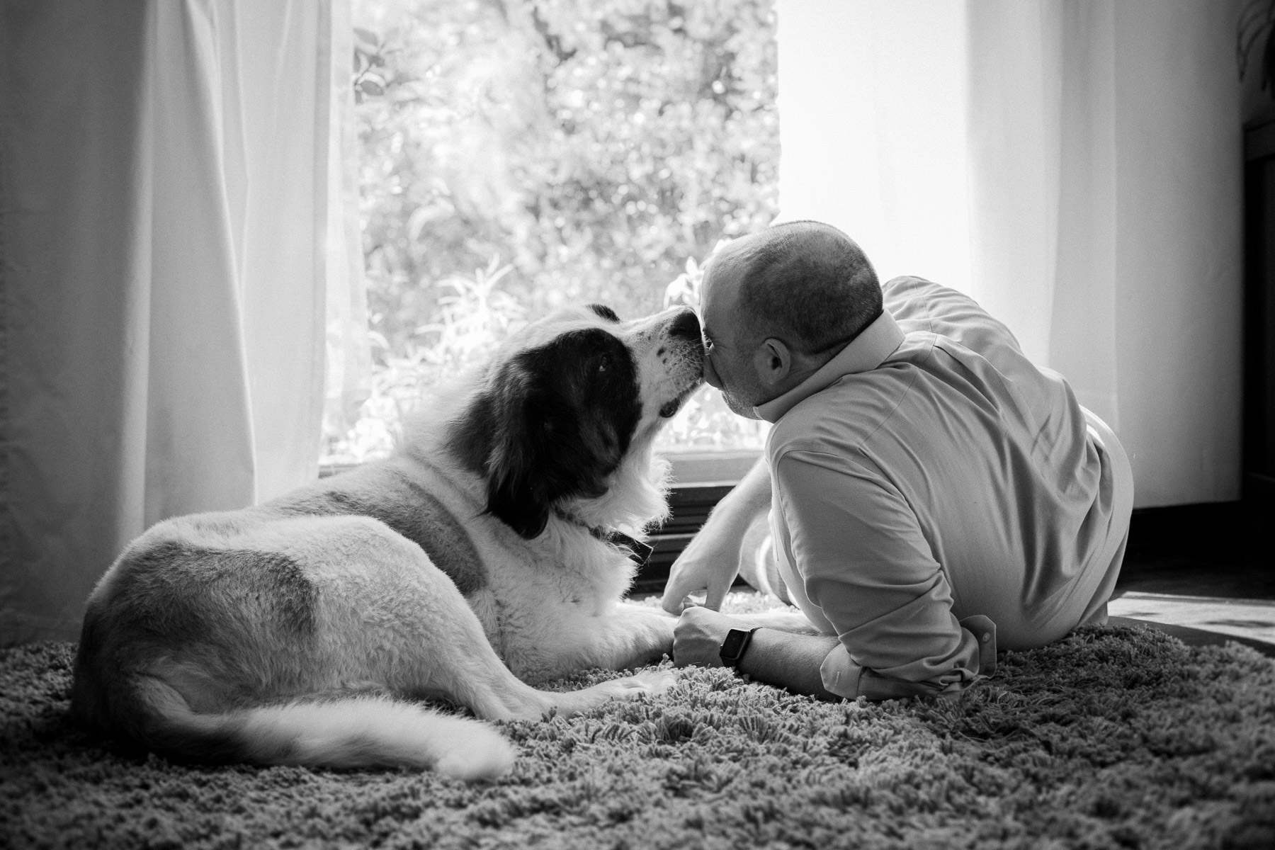 Modern-dog-photographer-2.jpg