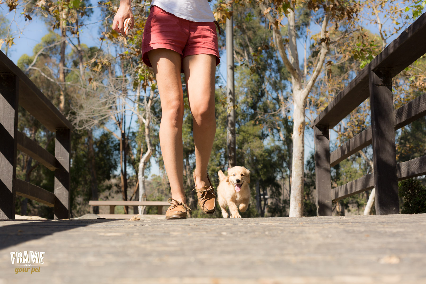 lifestyle-session-with-puppy-golden.jpg