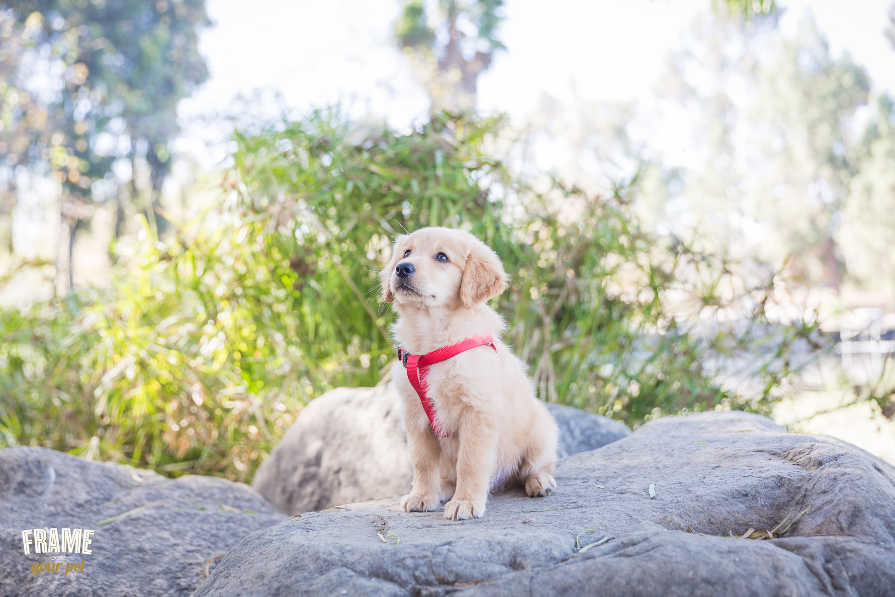los-angeles-modern-dog-photography.jpg