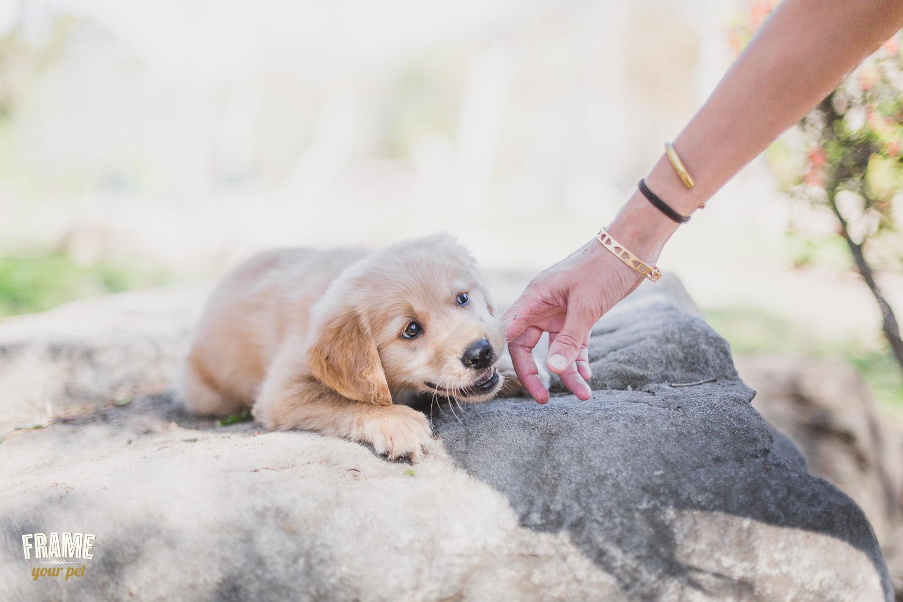 modern-dog-photography.jpg