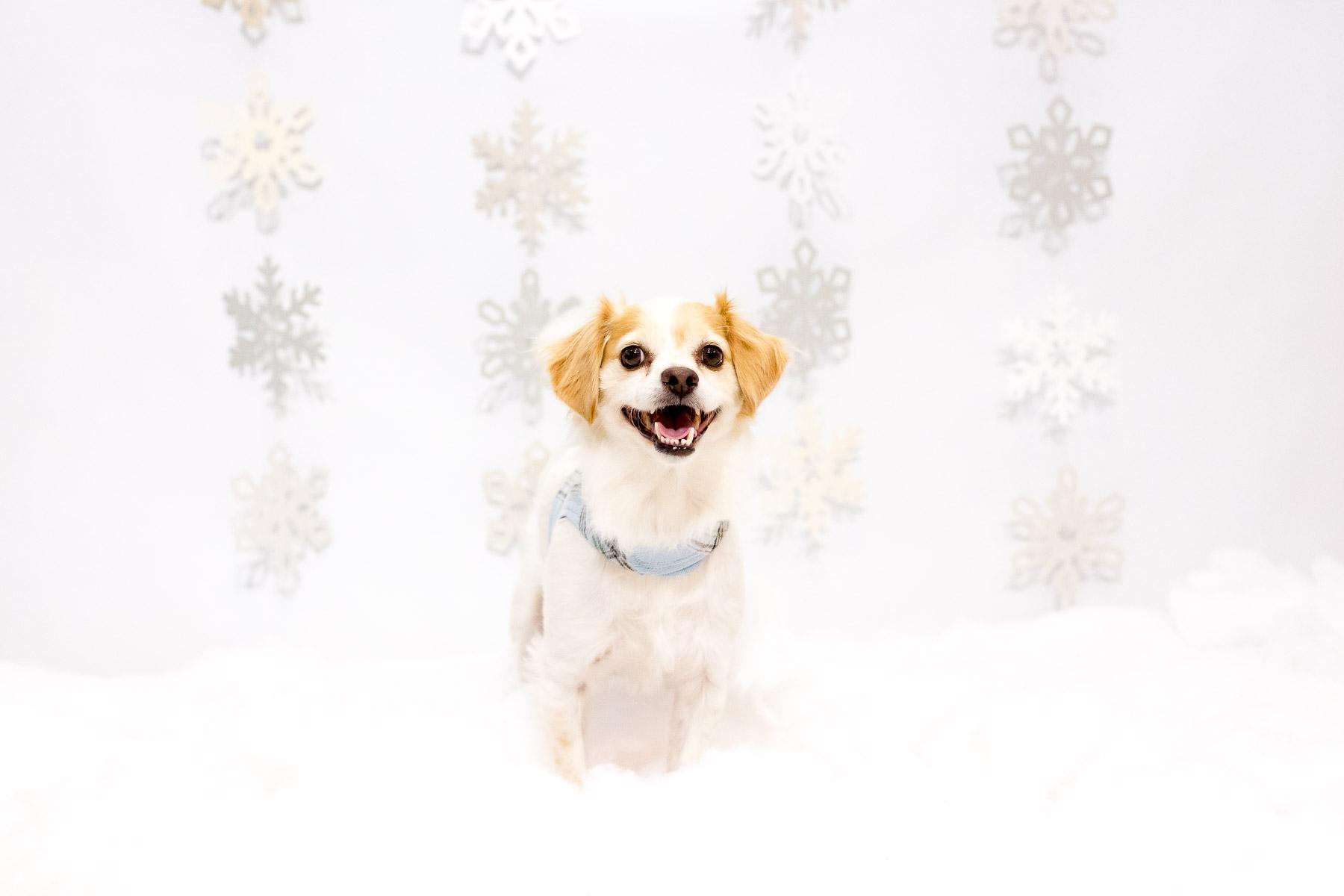 dog-photobooth-ideas