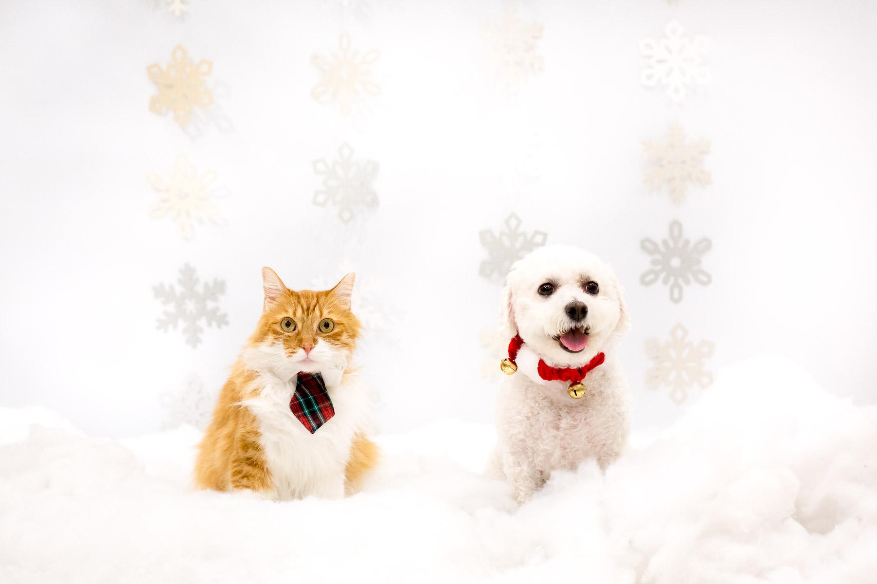 cat-and-dog-holidays-postcard-photos