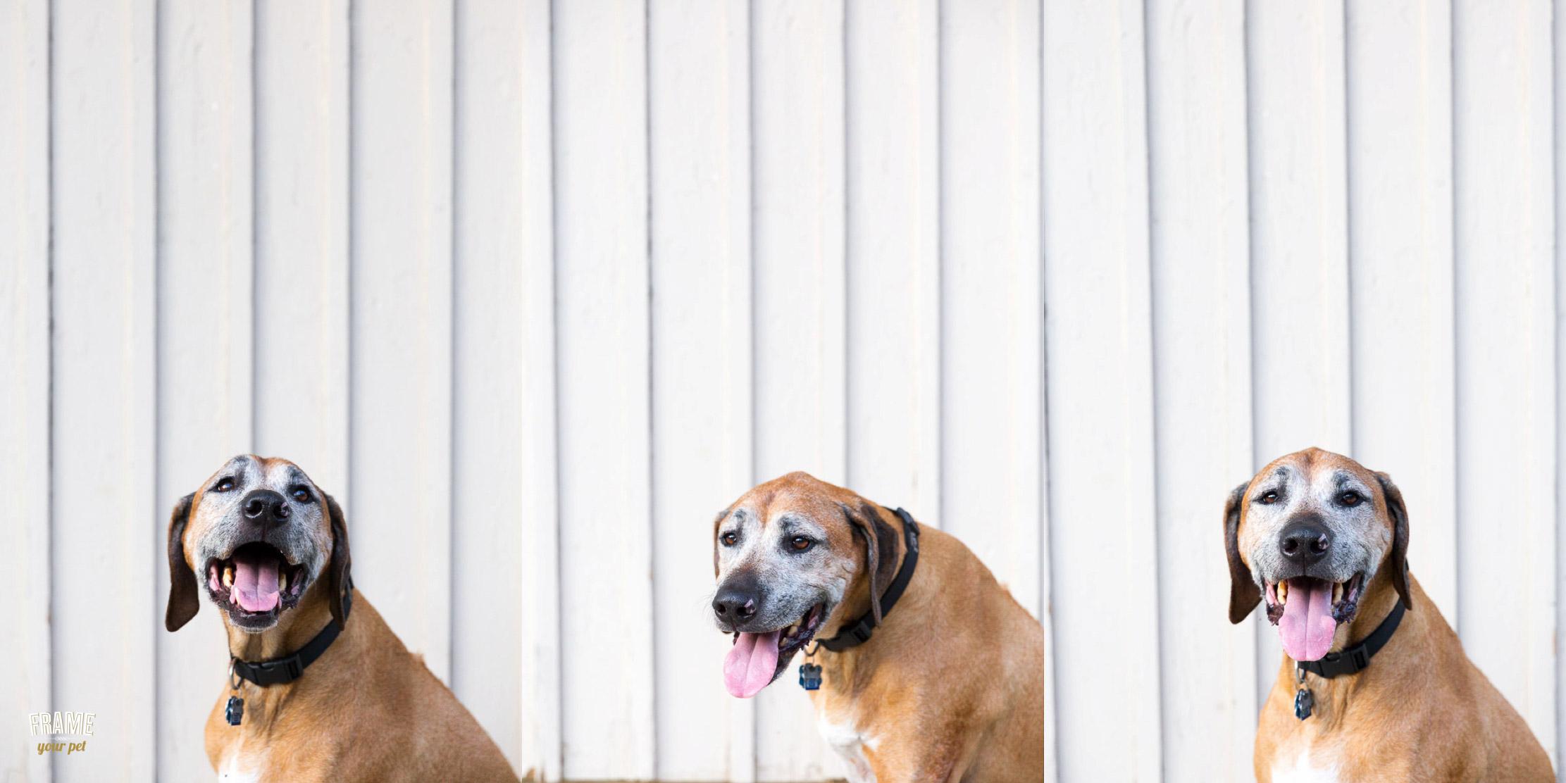 fun-photos-of-dogs