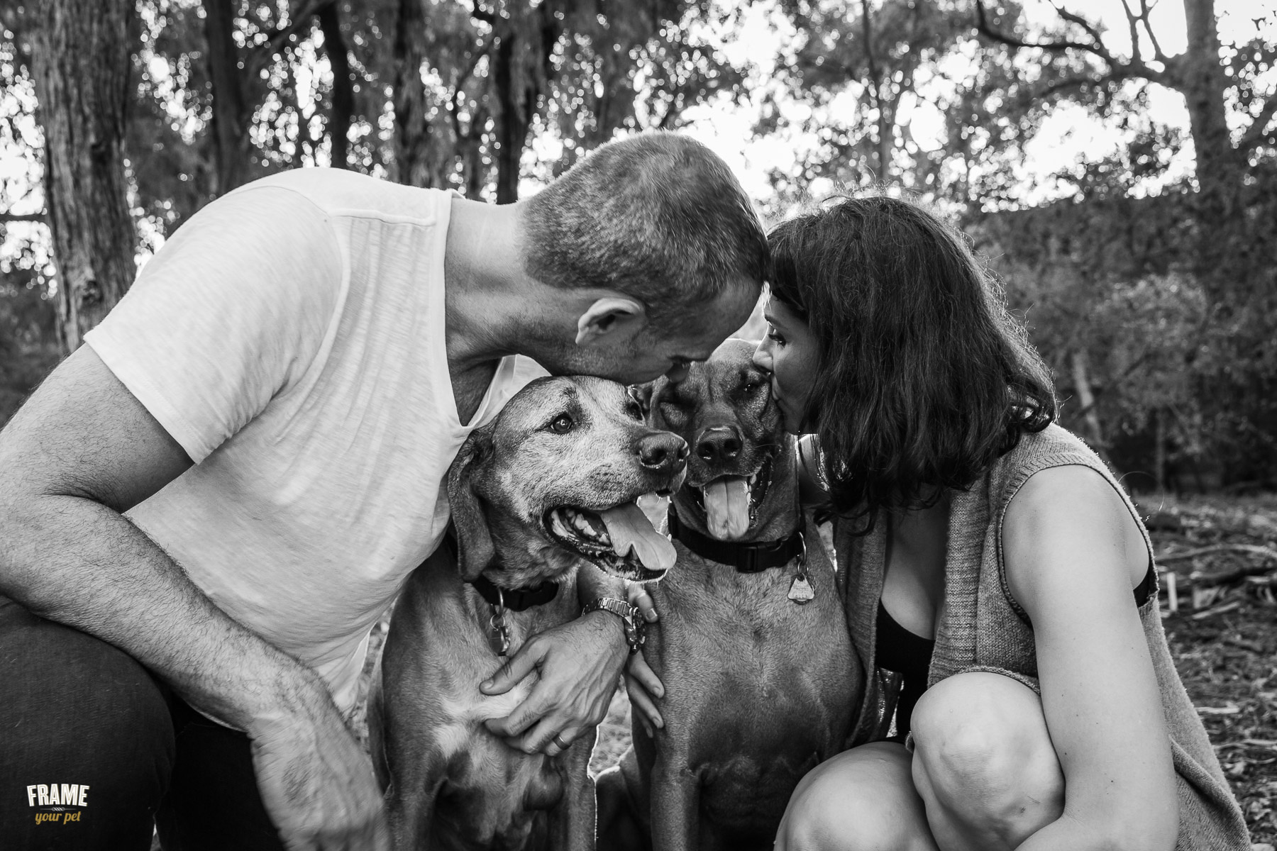 dog-photographer-santa-monica