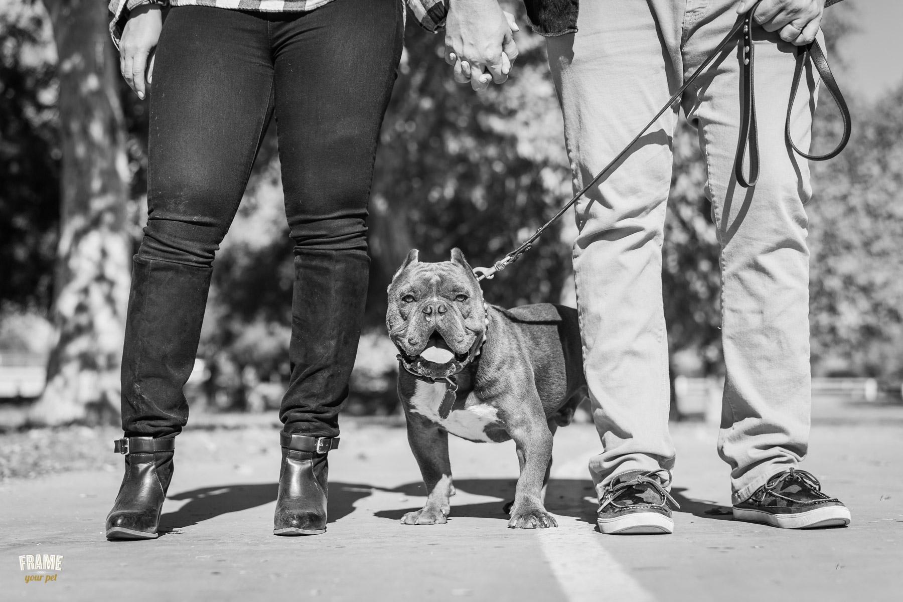 Modern-dog- photography