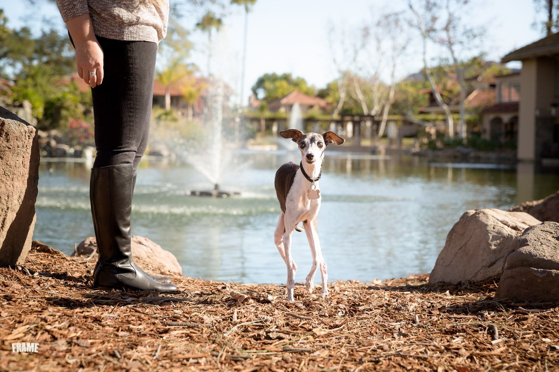 Los-Angeles-modern-dog-photography.jpg