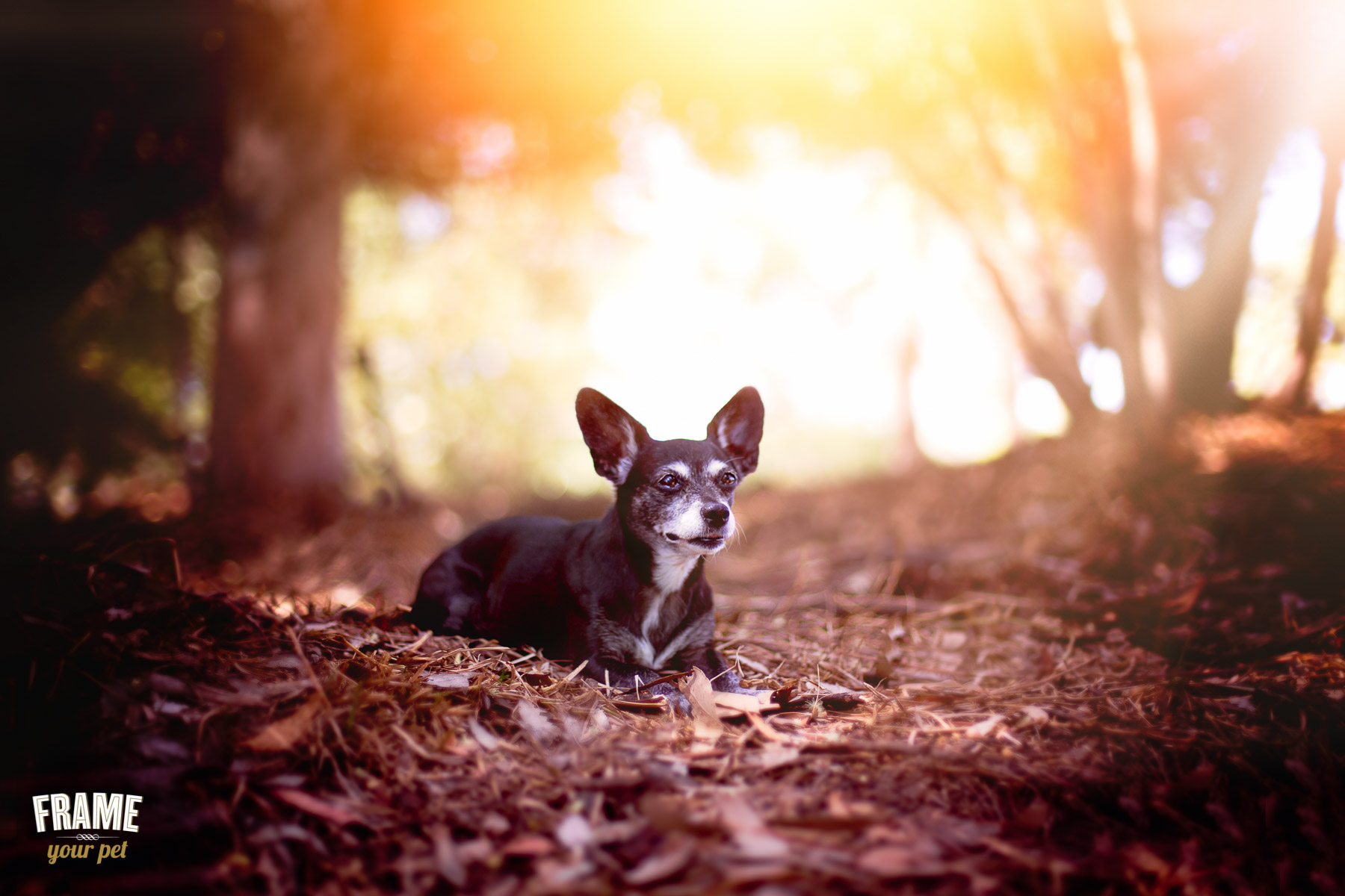 Commercial-dog-photographer-los-angeles.jpg