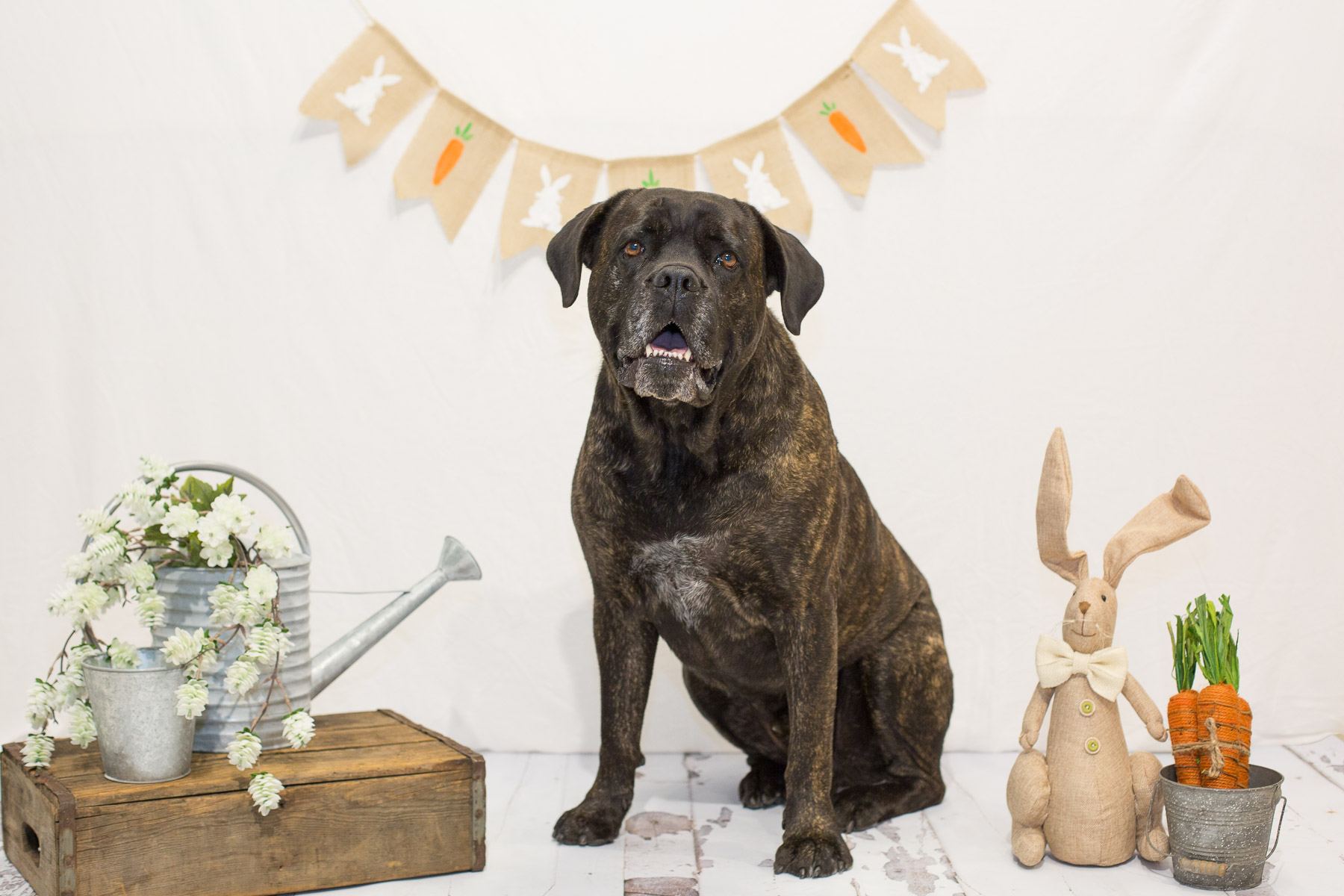 cute-easter-dog-photos.jpg