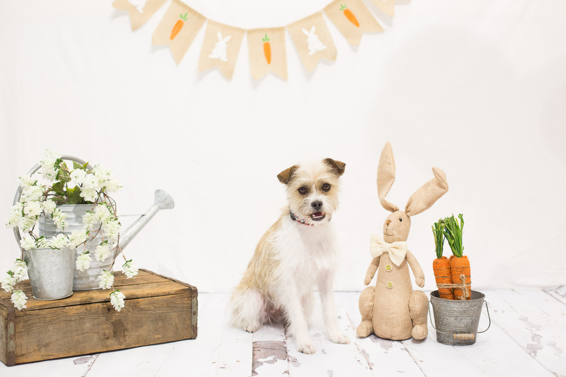 easter-photos-with-dogs.jpg