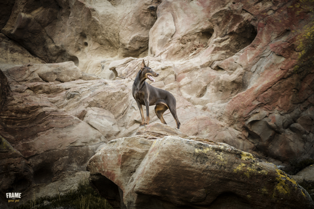 editorial-commercial-dog-photographer.jpg
