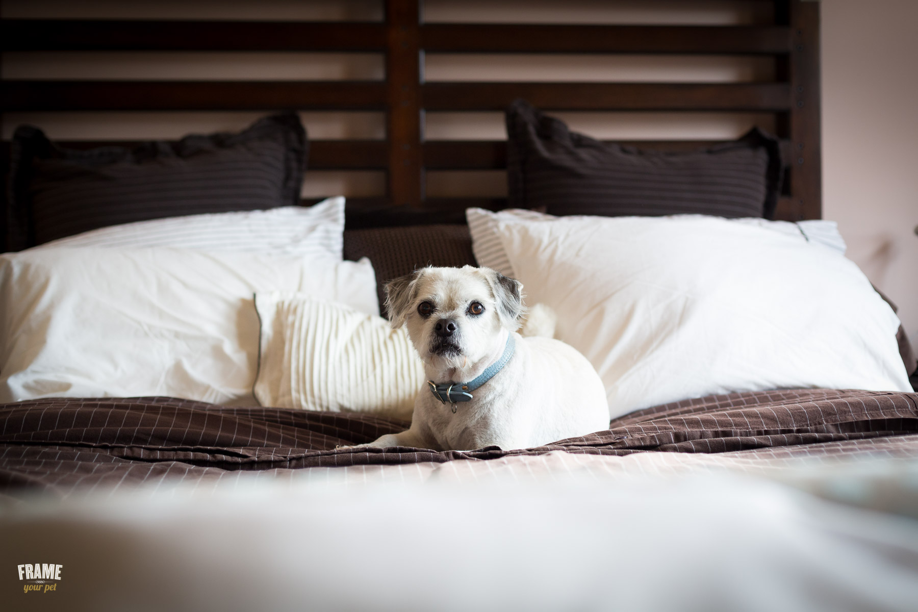 rescue-dog-on-bed-pet-photographer.jpg