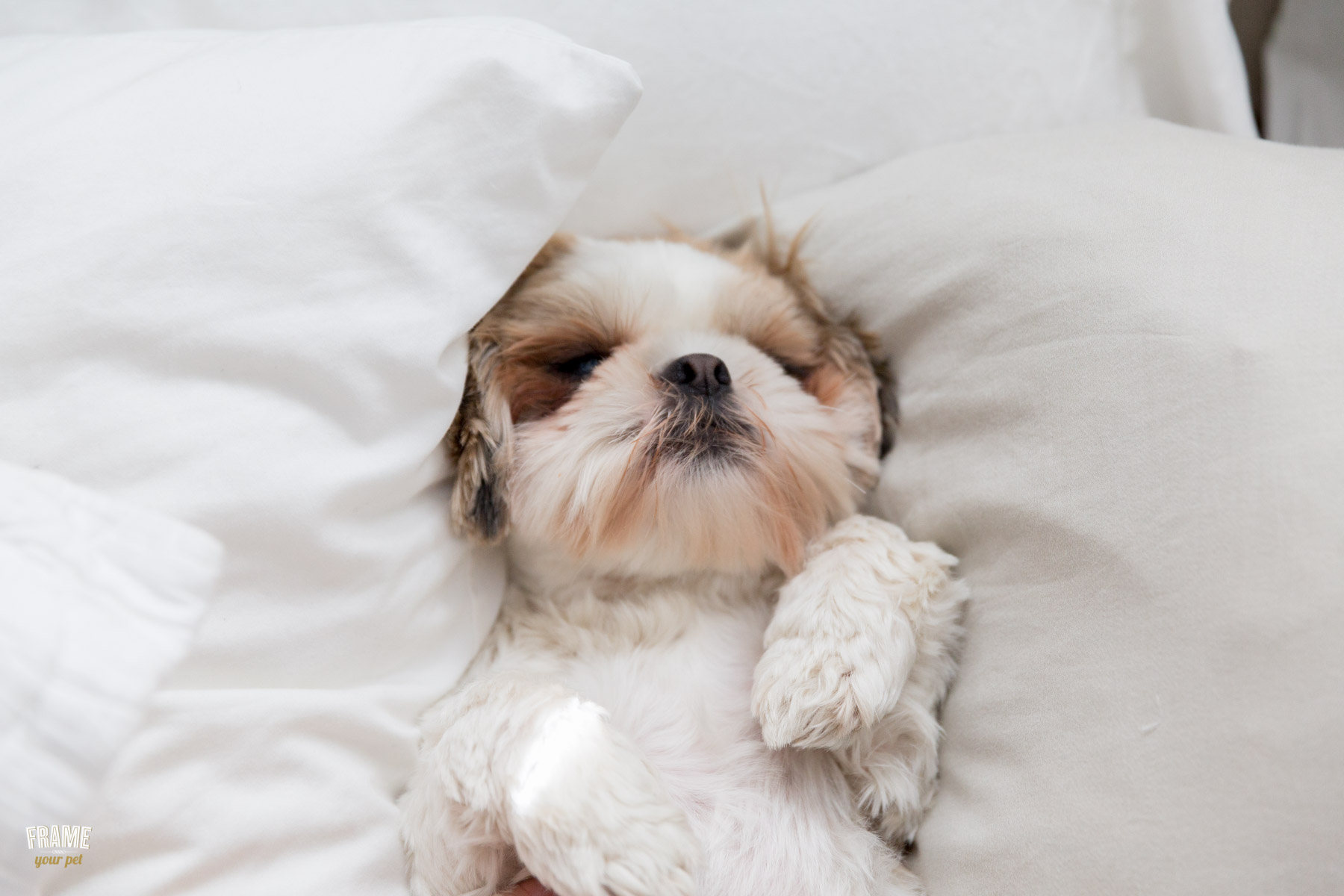 adorable-puppy-photos-puo-on-bed.jpg