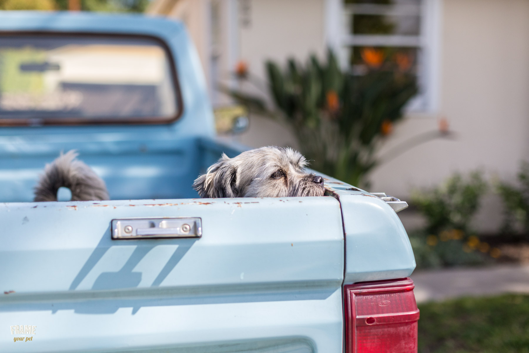dogs-in-pickup.jpg