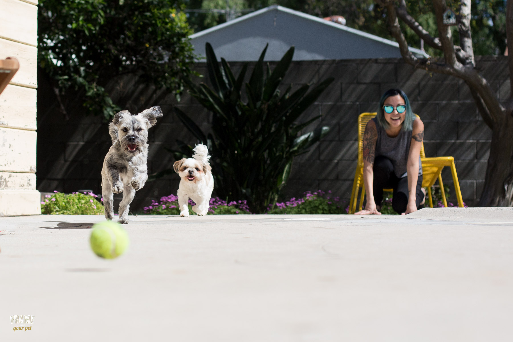 dogs-fetching-tennis-ball-pet-photography.jpg