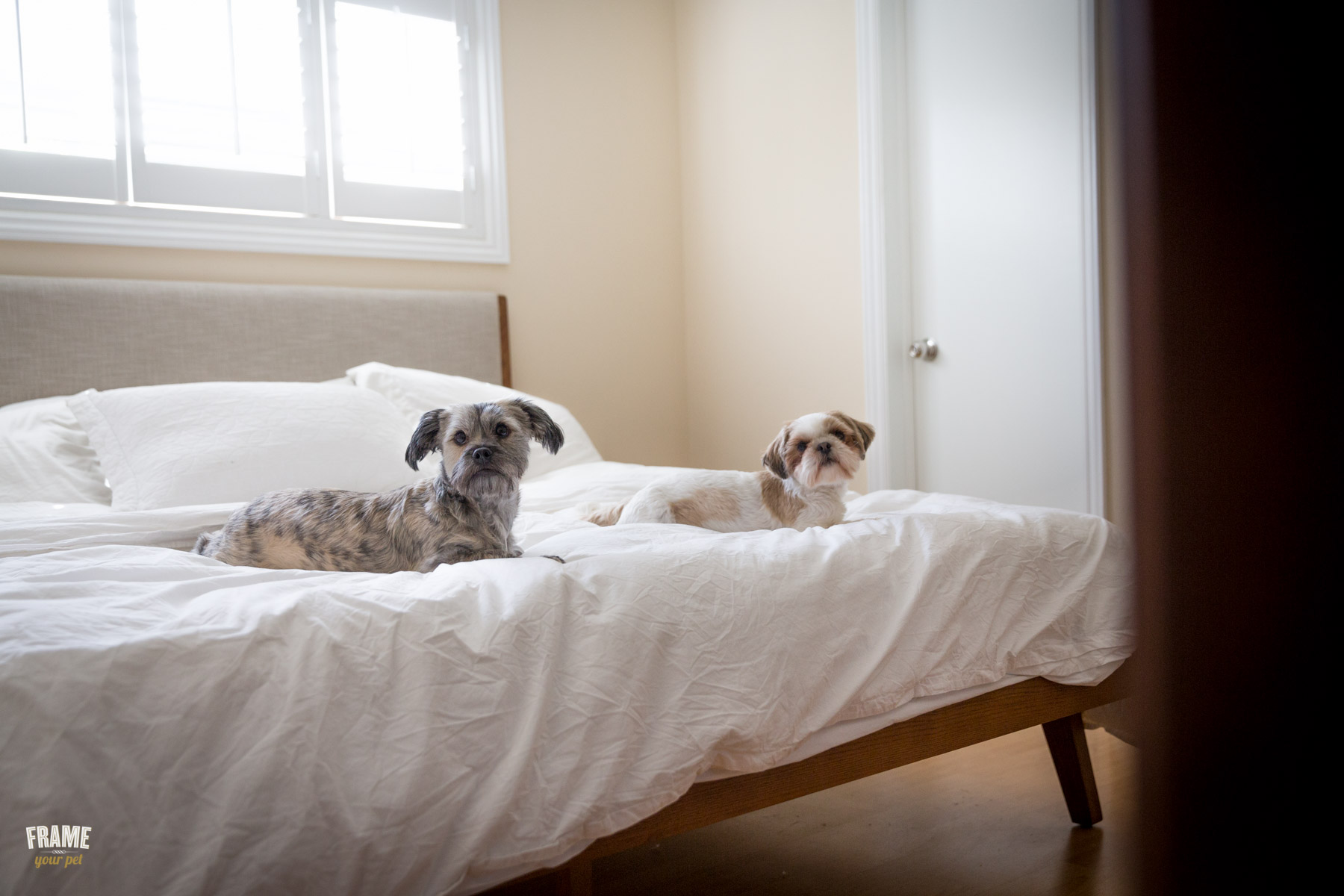 dogs-laying-on-bed.jpg