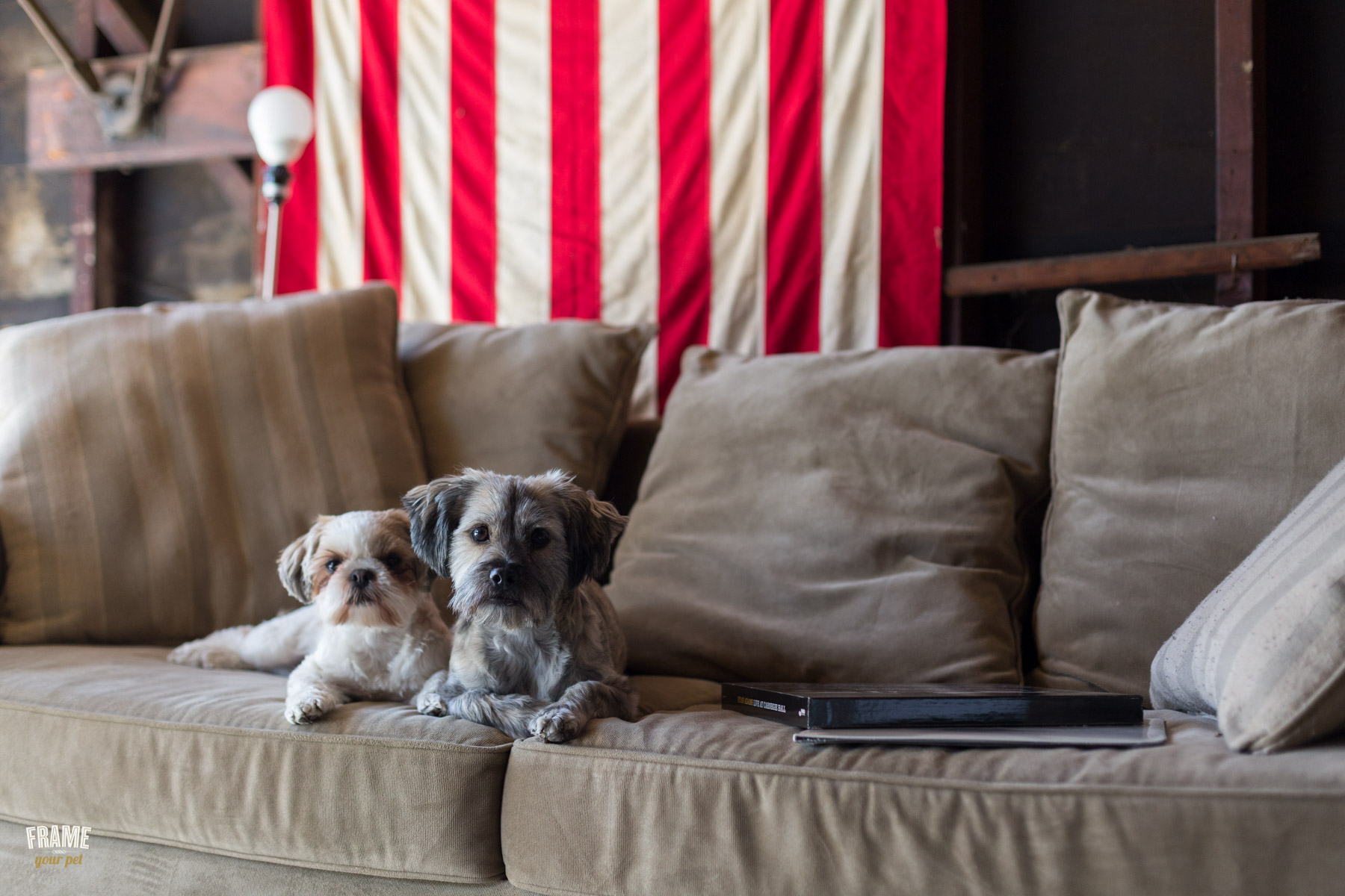 portraits-of-dogs-on-couch-los-angeles-dog-photographer.jpg